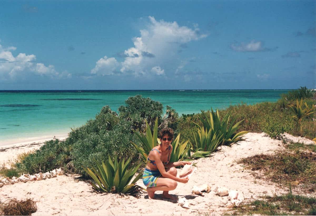 Conchiglie isole vergini britanniche