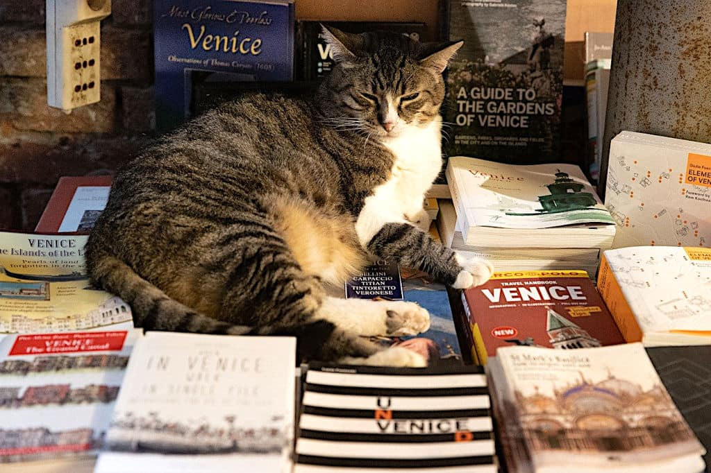 Gatto libreria acqua alta